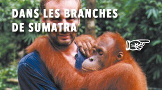 Dans les Branches de Sumatra