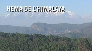 Hema de l'Himalaya