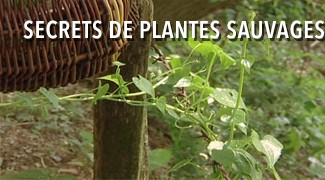 Secrets de plantes sauvages