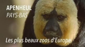 Zoo Apenhull