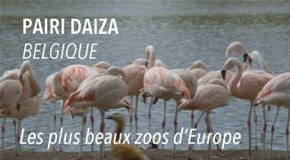 Zoo Pairi Daiza