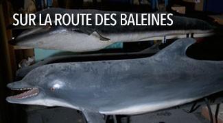 Sur la Route des Baleines
